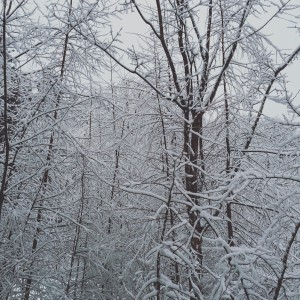 軽井沢の樹氷
